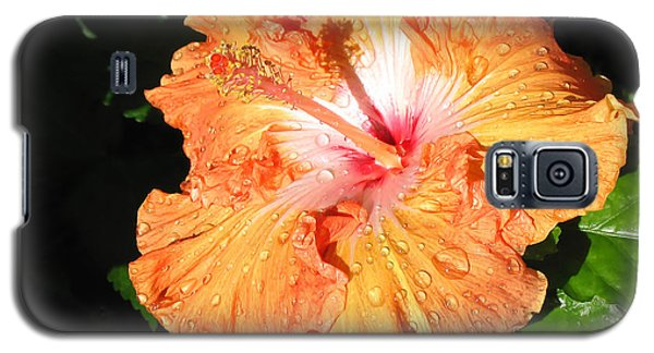 Orange Hibiscus After The Rain 1 Galaxy S5 Case by Connie Fox