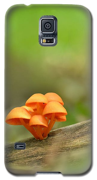 Galaxy S5 Case featuring the photograph Orange Mushrooms by JD Grimes