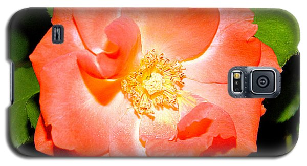 Galaxy S5 Case featuring the photograph Orange Rose  by Ester  Rogers