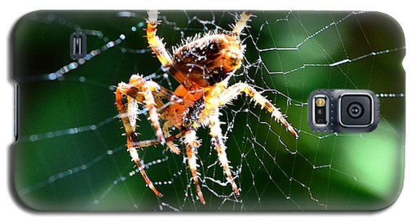 Orb Weaver And Lunch Galaxy S5 Case
