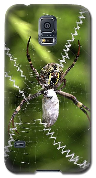 Galaxy S5 Case featuring the photograph Orb Weaver by Joy Watson