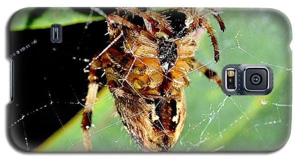 Orb Weaver Waits Galaxy S5 Case