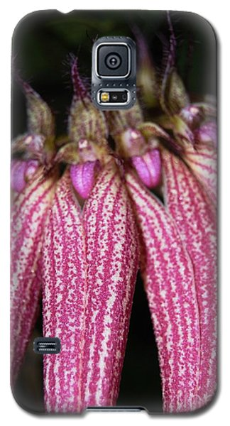 Orchid Macro 3 Galaxy S5 Case by Angela Murray