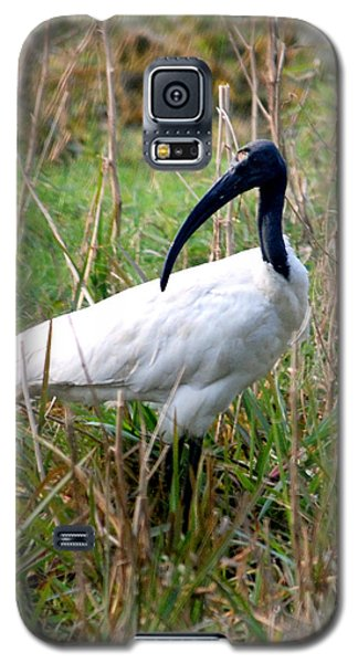 Galaxy S5 Case featuring the photograph Oriental White Ibis by Pravine Chester