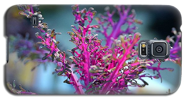 Galaxy S5 Case featuring the photograph Ornamental Cabbage by Judi Bagwell