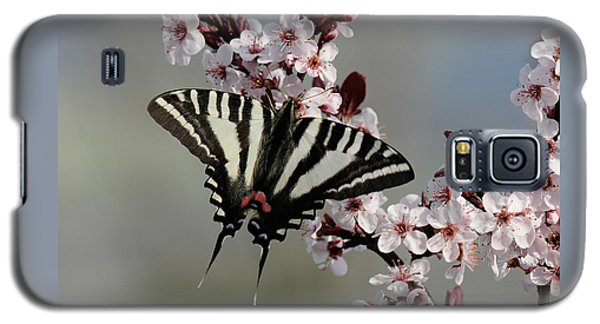 Ornamental Plum Blossoms With Zebra Swallowtail Galaxy S5 Case