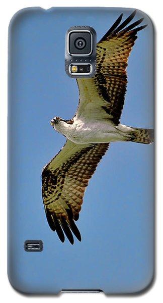 Osprey Above Galaxy S5 Case