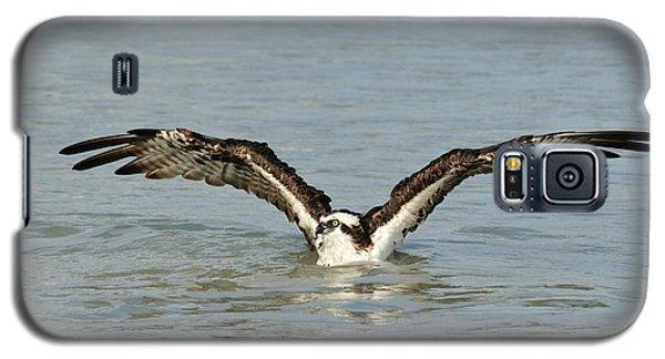 Osprey Bathing Galaxy S5 Case
