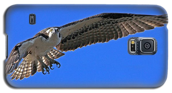 Galaxy S5 Case featuring the photograph Osprey Flight by Larry Nieland