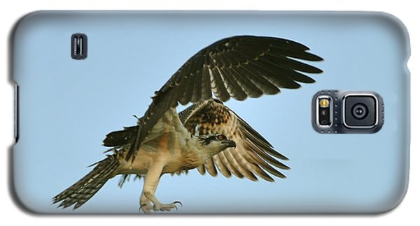 Galaxy S5 Case featuring the photograph Osprey In Flight by Rick Frost