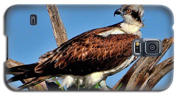 Osprey On A Windy Morning Galaxy S5 Case