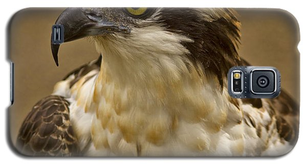 Galaxy S5 Case featuring the photograph Osprey Portrait by Anne Rodkin