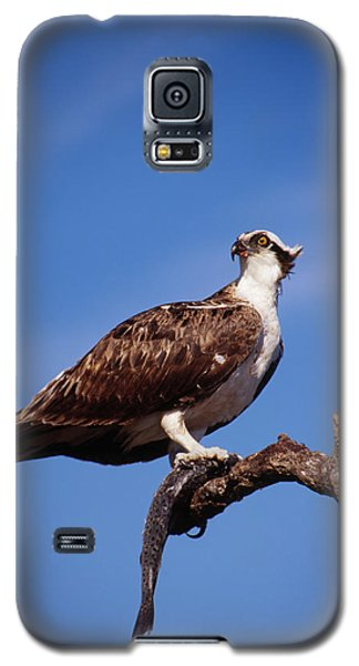 Galaxy S5 Case featuring the photograph Osprey With Fish by Bradford Martin