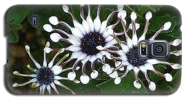 Galaxy S5 Case featuring the photograph Osteospermum by Katy Mei