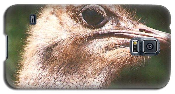 Ostrich Galaxy S5 Case