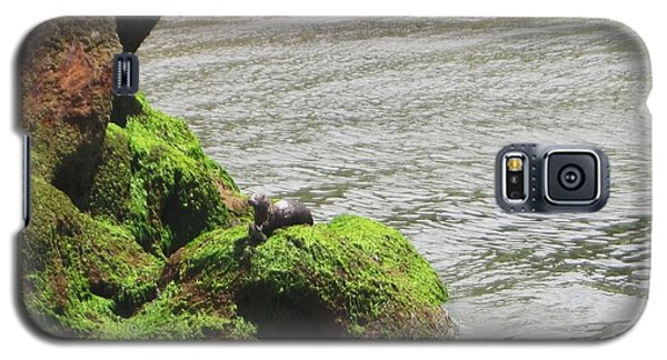 Galaxy S5 Case featuring the photograph Otter In Bellingham Bay by Karen Molenaar Terrell