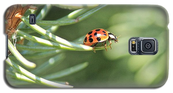 Galaxy S5 Case featuring the photograph Out On A Limb by Penny Meyers