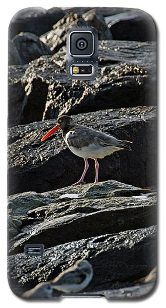 Oyster On The Rocks Galaxy S5 Case