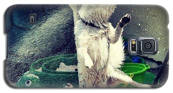Funny Galaxy S5 Case - Oz And Rock by Mandy Shupp