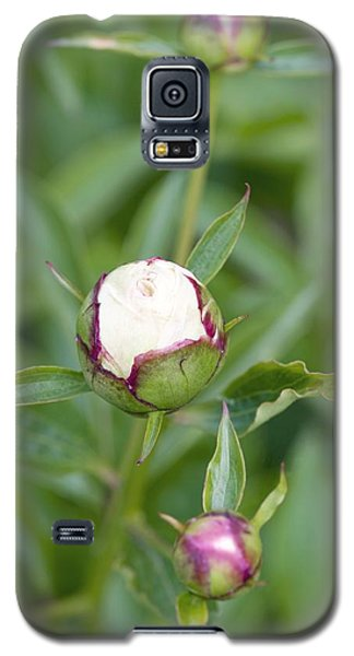 Shirley Temple Galaxy S5 Case - Paeonia Lactiflora 'shirley Temple' by Jon Stokes