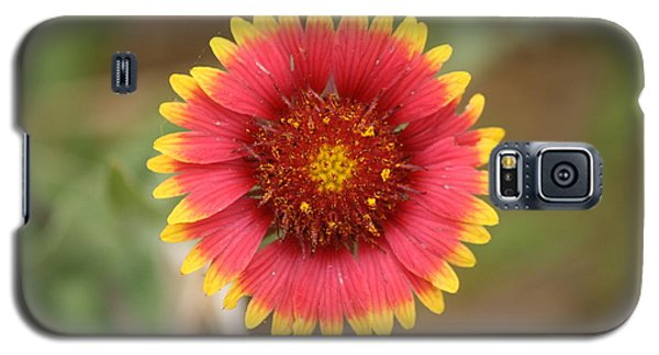 Painted Blanket Flower Galaxy S5 Case