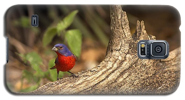 Galaxy S5 Case featuring the photograph Painted Bunting On Log by Anne Rodkin