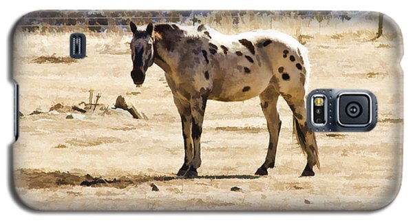 Galaxy S5 Case featuring the photograph Painted Horses II by Angelique Olin