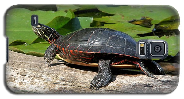 Painted Turtle On Log Galaxy S5 Case by Doris Potter