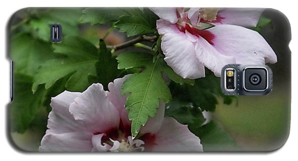 Galaxy S5 Case featuring the photograph Pair Of Rose Of Sharon by Rick Friedle