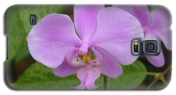 Pale Pink Orchid Galaxy S5 Case