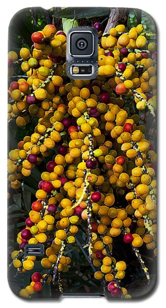 Galaxy S5 Case featuring the photograph Palm Seeds Baroque by Steven Sparks