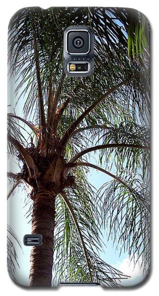 Palm Tree  Galaxy S5 Case by Rebecca Overton