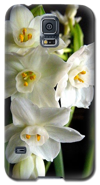 Galaxy S5 Case featuring the photograph Paperwhites by Robin Dickinson