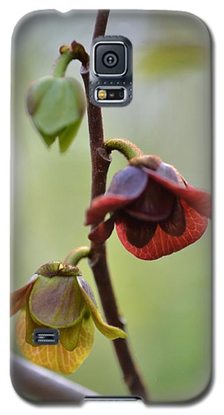 Paw-paw Flowers Galaxy S5 Case