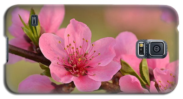 Peach Beautiful Galaxy S5 Case