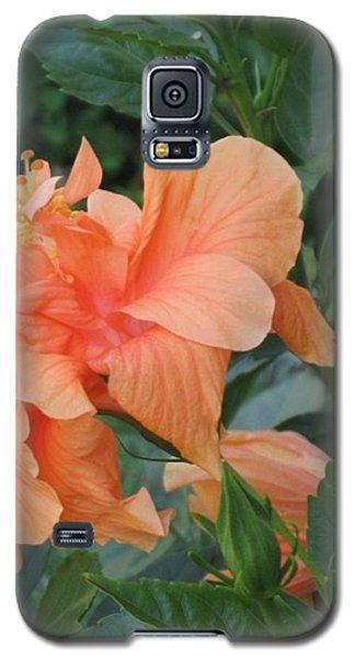 Peach Hibiscus  Galaxy S5 Case