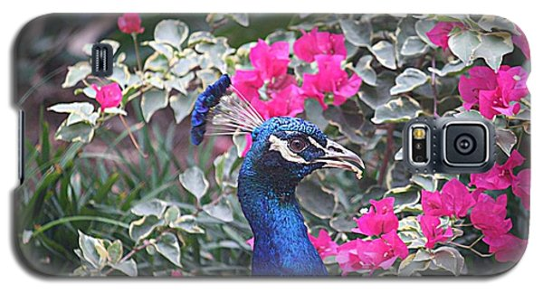 Galaxy S5 Case featuring the photograph Peacock And Bouganvillas by Donna Smith