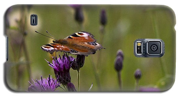 Peacock Butterfly On Knapweed Galaxy S5 Case by Clare Bambers
