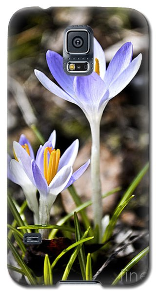 Peaking Spring Galaxy S5 Case