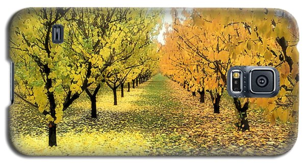 Galaxy S5 Case featuring the photograph Pear Orchard In Fall by Katie Wing Vigil