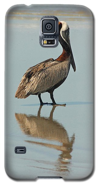 Pelican Reflections Galaxy S5 Case by Cindy Haggerty