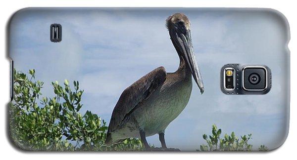 Perched Pelican Galaxy S5 Case