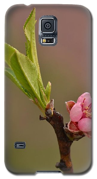 Petite Peach Galaxy S5 Case by JD Grimes