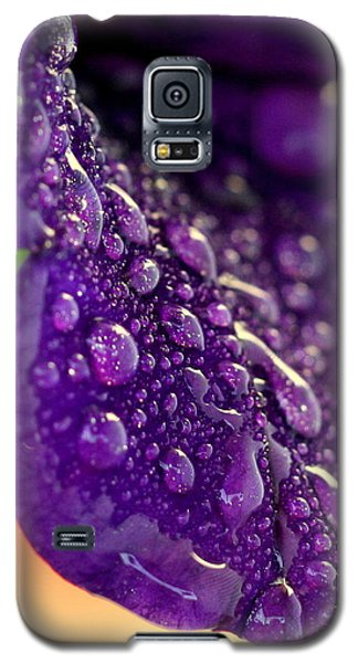 Galaxy S5 Case featuring the photograph Petunia Raindrops by Suzanne Stout