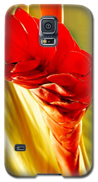 Photograph Of A Red Ginger Flower Galaxy S5 Case by Perla Copernik