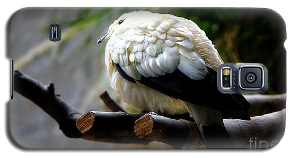 Galaxy S5 Case featuring the photograph Pied Imperial Pigeon by Davandra Cribbie