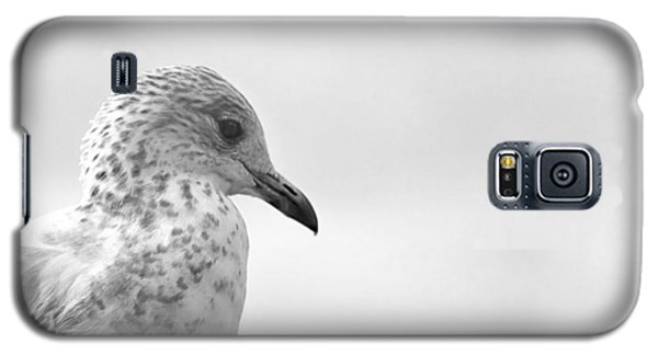 Galaxy S5 Case featuring the photograph Pigeon Pride by Nicola Nobile