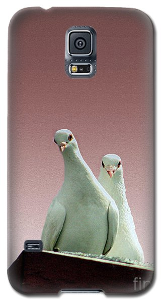 Pigeons In The Pink Galaxy S5 Case by Linsey Williams