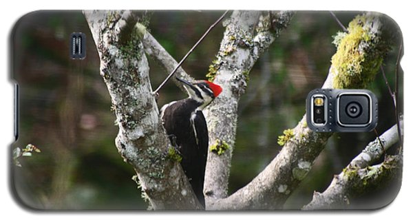 Galaxy S5 Case featuring the photograph Pileated Woodpecker In Cherry Tree by Kym Backland