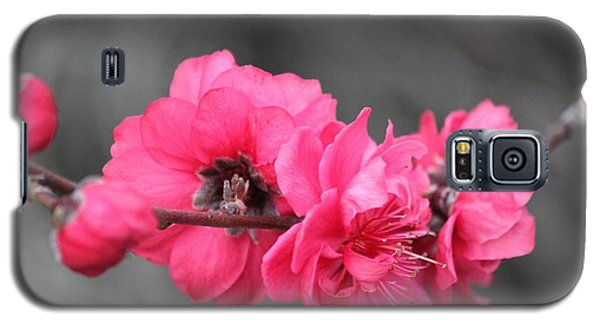 Galaxy S5 Case featuring the photograph Pink Blossoms  by Amy Gallagher